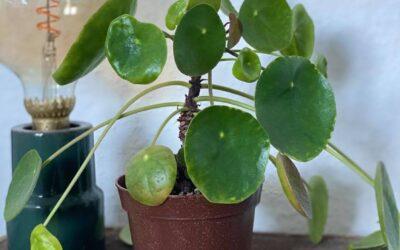Sådan holder du liv i dine indendørs planter